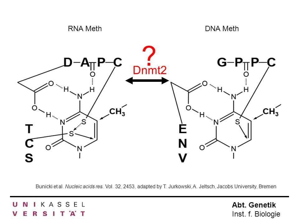 RNA MethDNA Meth.Dnmt2. Bunicki et al. Nucleic acids res.