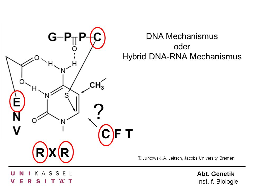Hybrid DNA-RNA Mechanismus