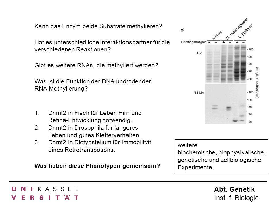 Gibt es weitere RNAs, die methyliert werden