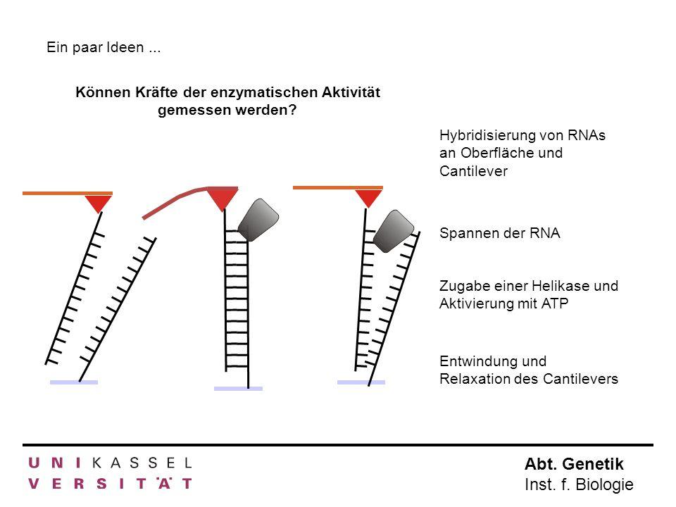 Können Kräfte der enzymatischen Aktivität gemessen werden
