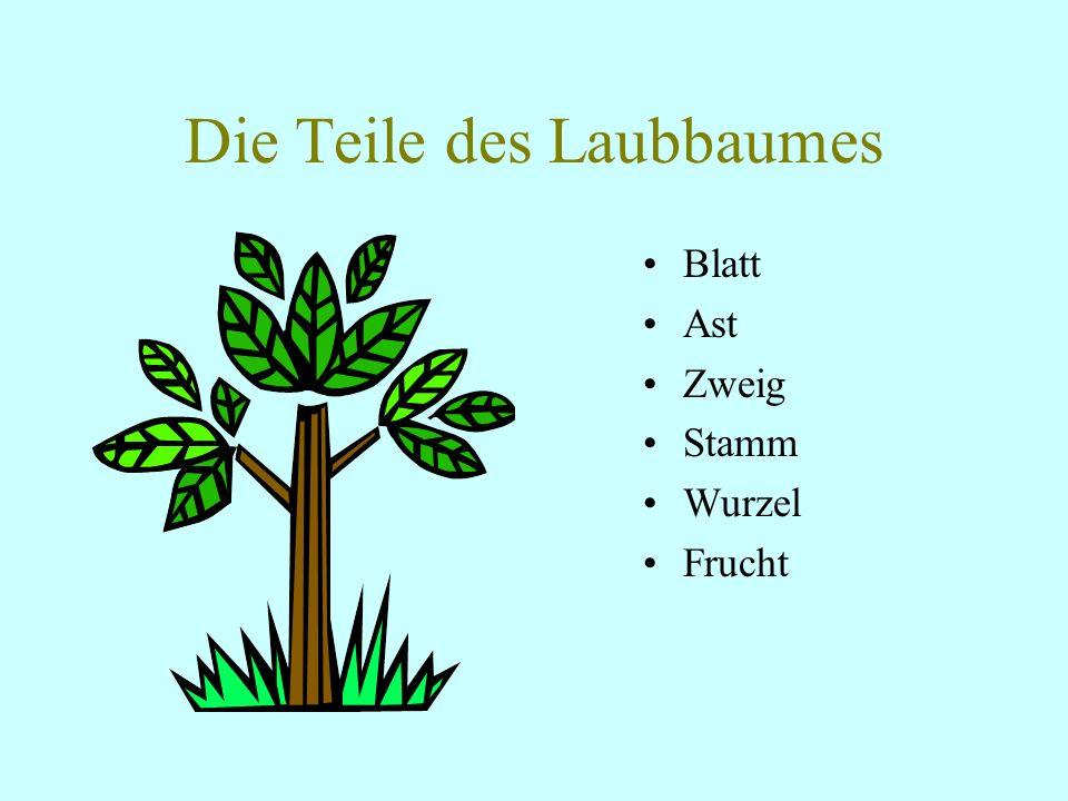 Die Teile des Laubbaumes
