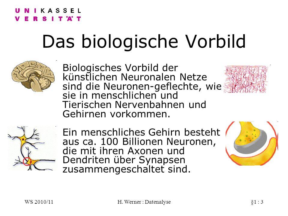 Das biologische Vorbild