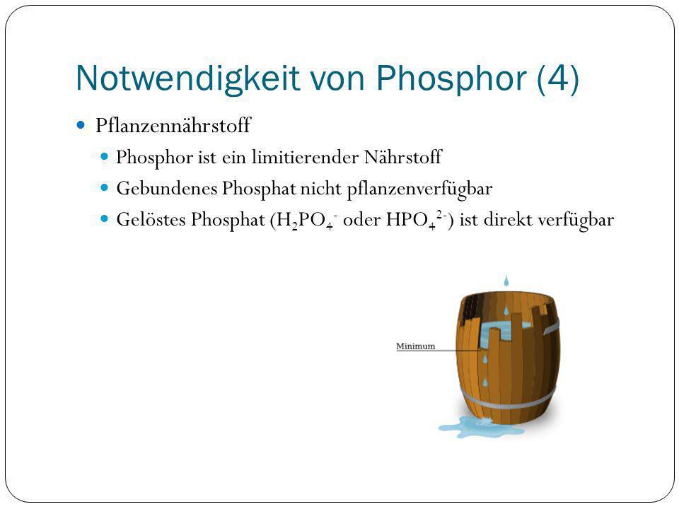 Notwendigkeit von Phosphor (4)