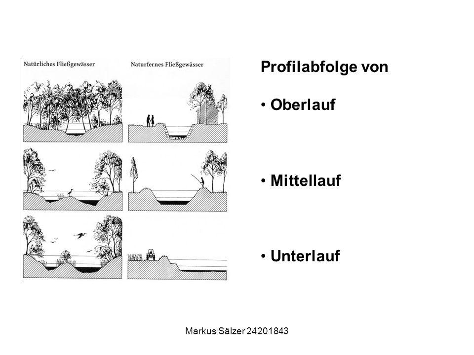 Profilabfolge von Oberlauf Mittellauf Unterlauf Markus Sälzer 24201843