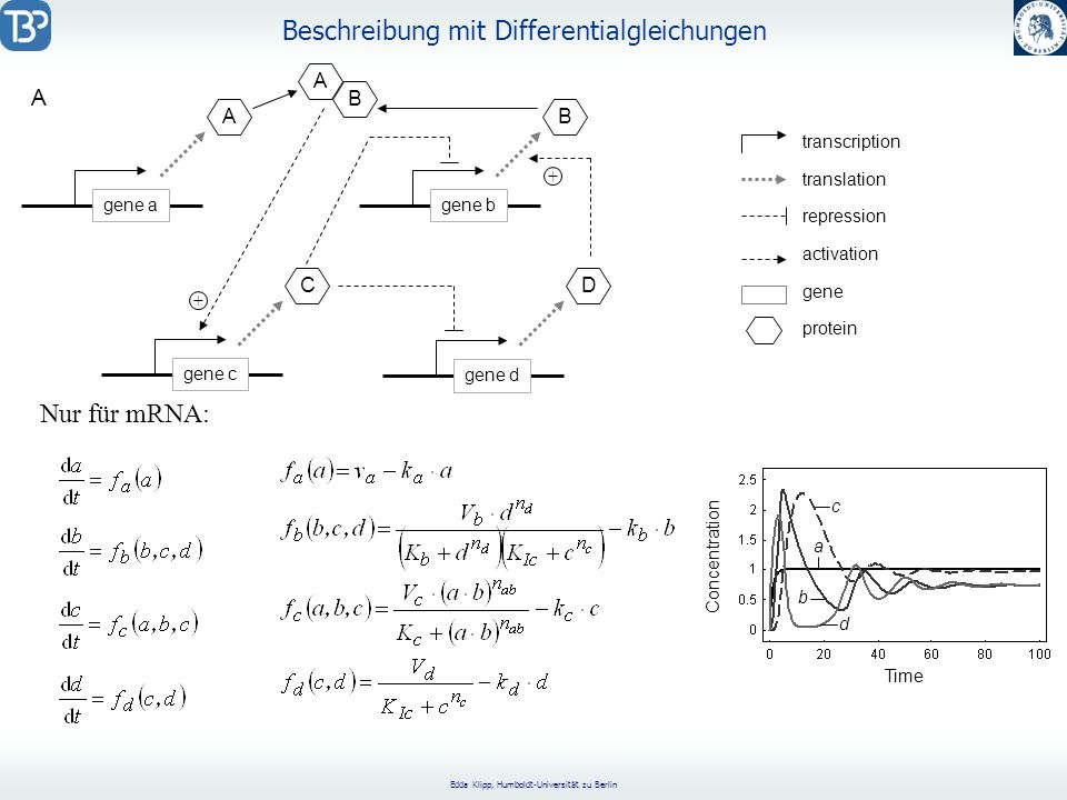 Beschreibung mit Differentialgleichungen