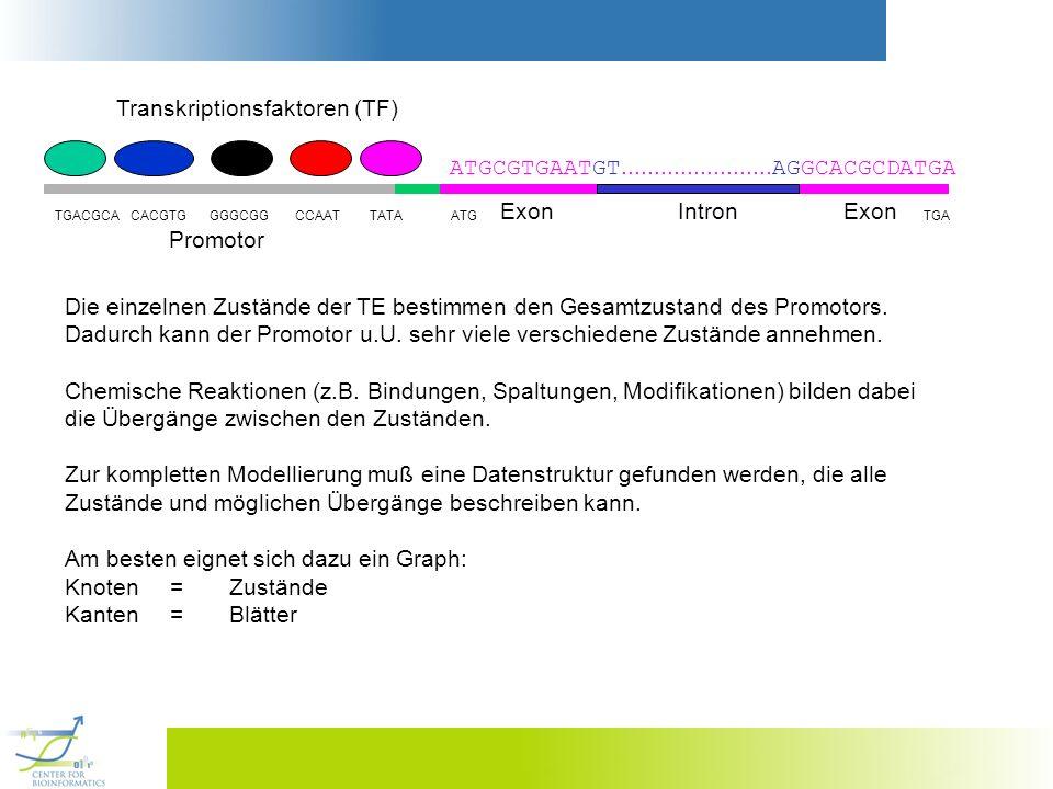 Transkriptionsfaktoren (TF)