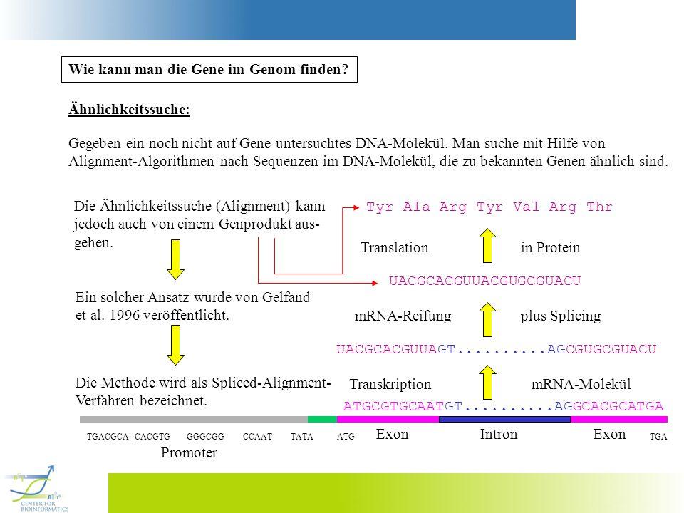 Wie kann man die Gene im Genom finden