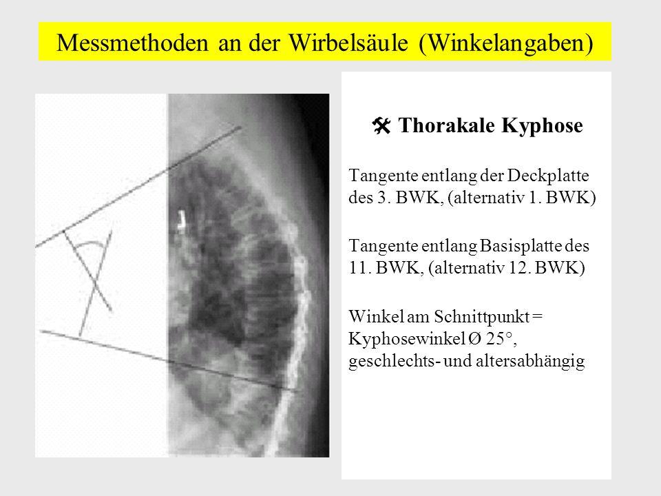 Berühmt Anatomie Der Unteren Wirbelsäule Zeitgenössisch - Anatomie ...