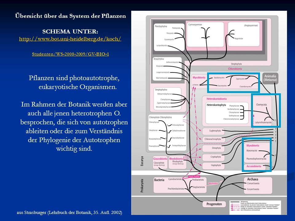 Übersicht über das System der Pflanzen Studenten/WS-2008-2009/GV-BIO-1