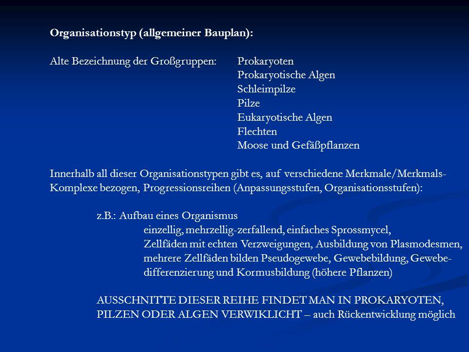 Organisationstyp (allgemeiner Bauplan):