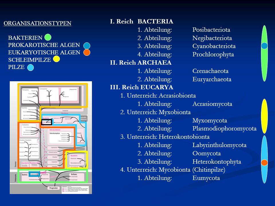 1. Abteilung: Posibacteriota 2. Abteilung: Negibacteriota