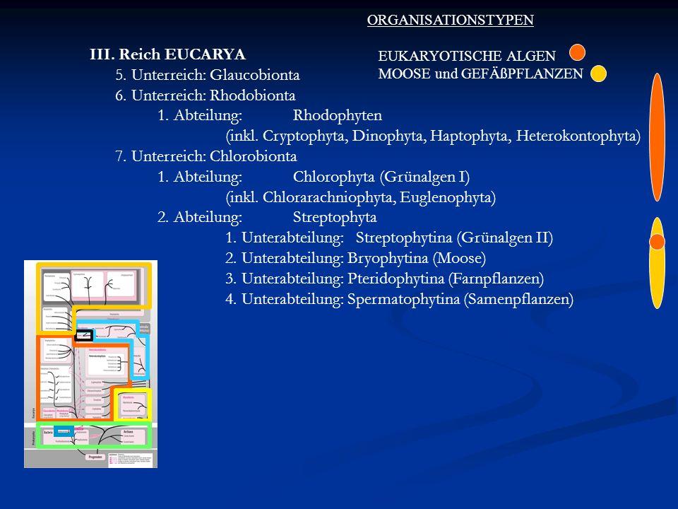 5. Unterreich: Glaucobionta 6. Unterreich: Rhodobionta
