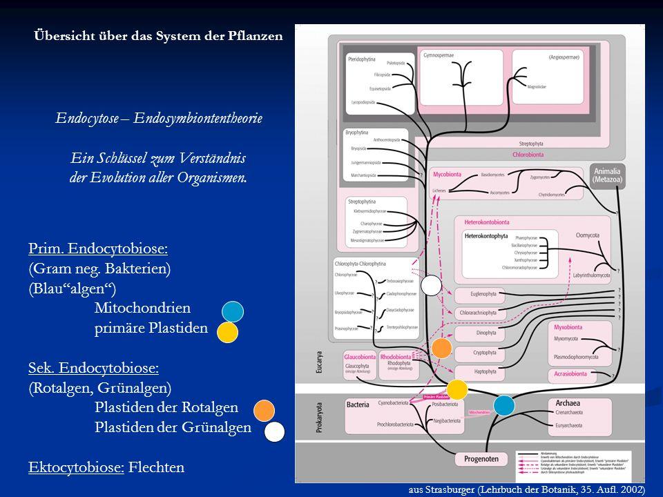 Endocytose – Endosymbiontentheorie Ein Schlüssel zum Verständnis