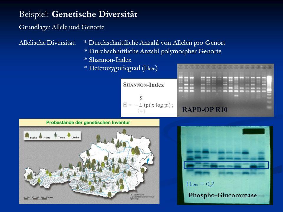 Beispiel: Genetische Diversität