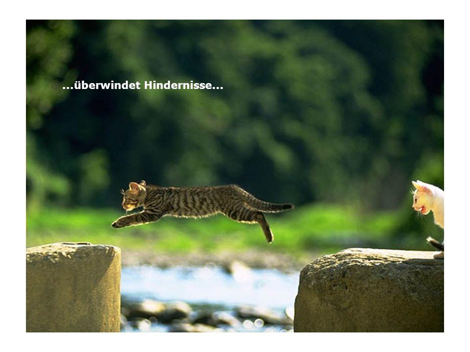 ...überwindet Hindernisse...