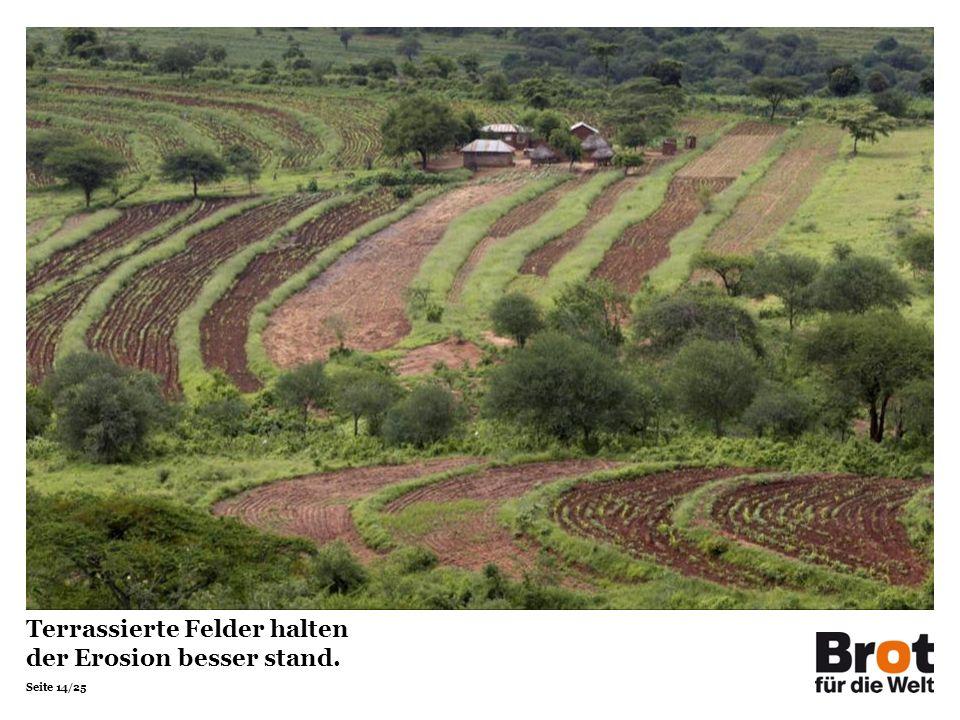 Terrassierte Felder halten der Erosion besser stand.