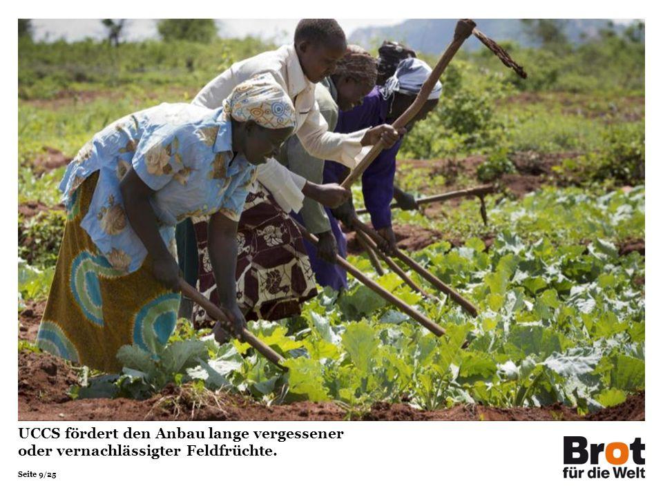 UCCS fördert den Anbau lange vergessener oder vernachlässigter Feldfrüchte.
