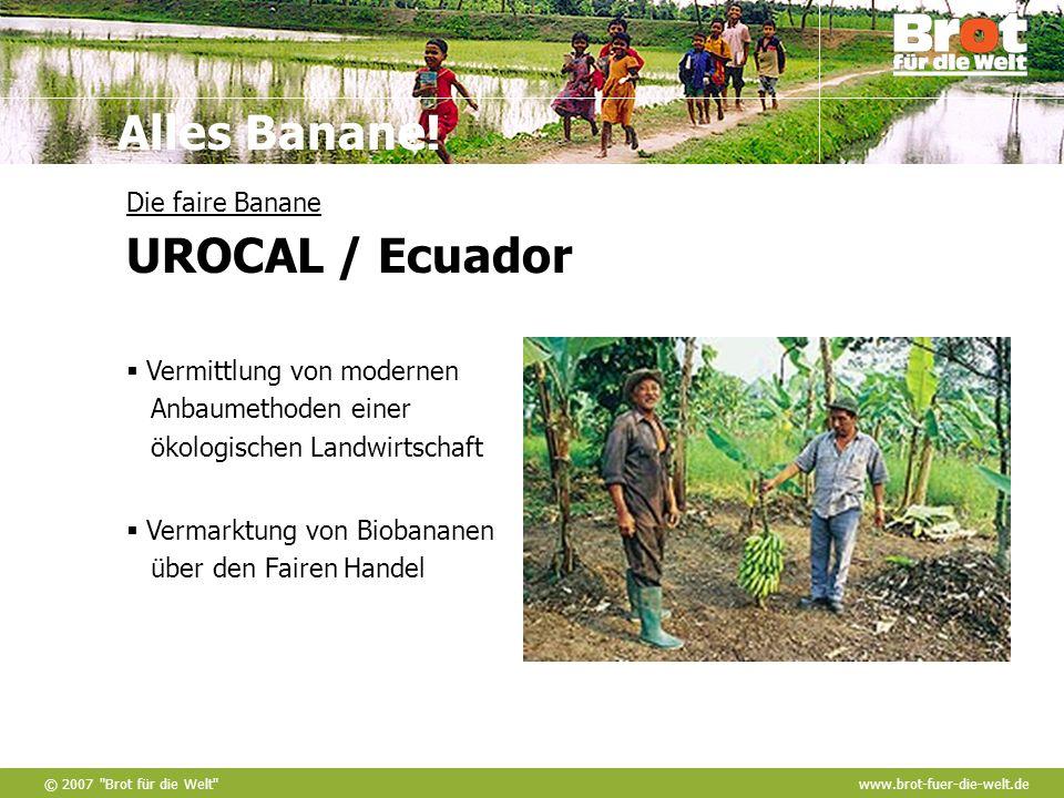 Die faire Banane UROCAL / Ecuador