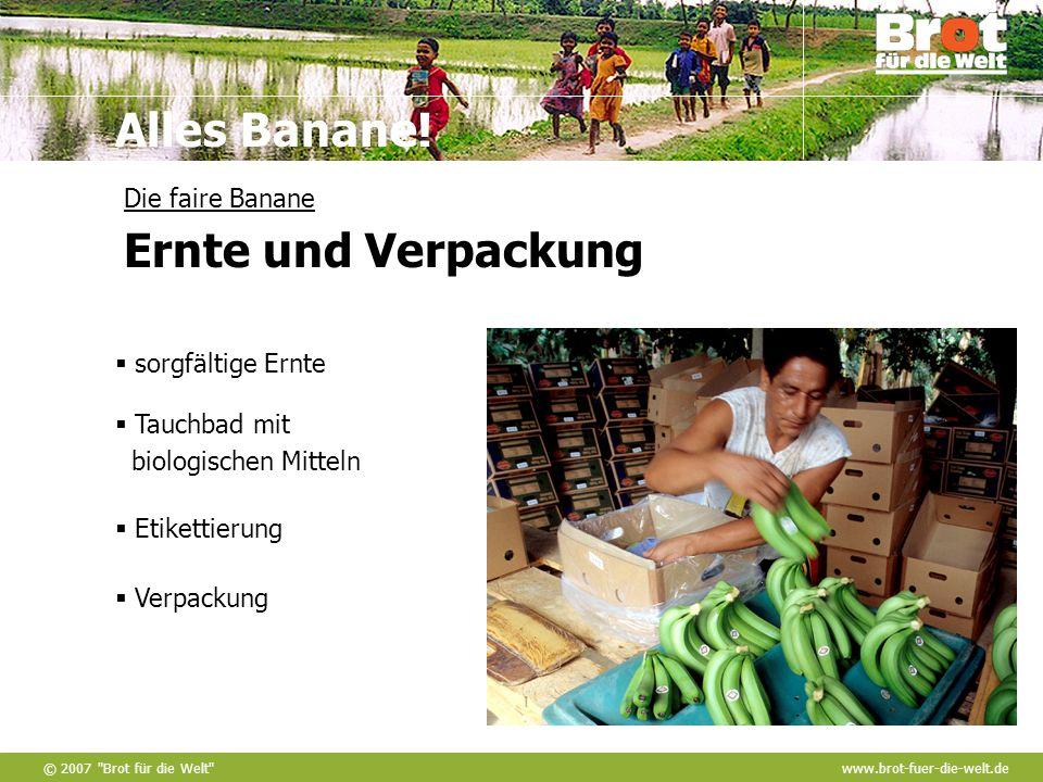 Die faire Banane Ernte und Verpackung