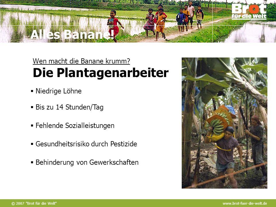 Wen macht die Banane krumm Die Plantagenarbeiter
