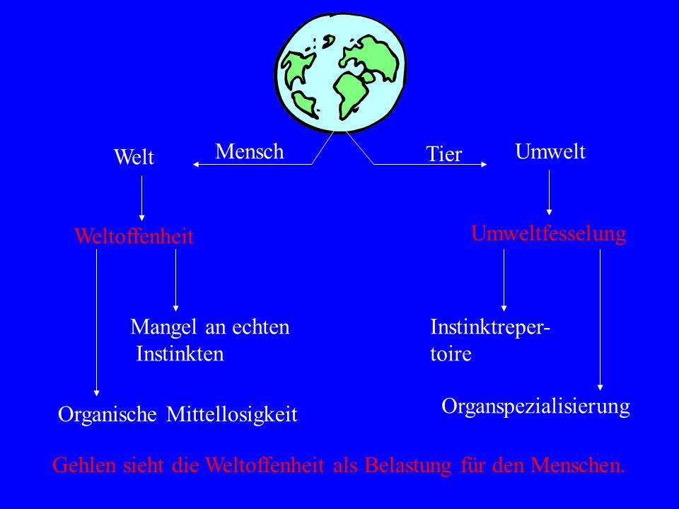 Mensch Umwelt. Welt. Tier. Weltoffenheit. Umweltfesselung. Mangel an echten. Instinkten. Instinktreper-