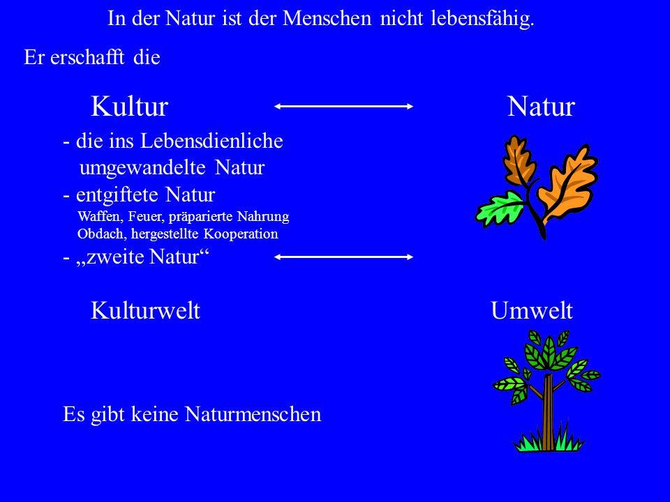 Kultur Natur Kulturwelt Umwelt