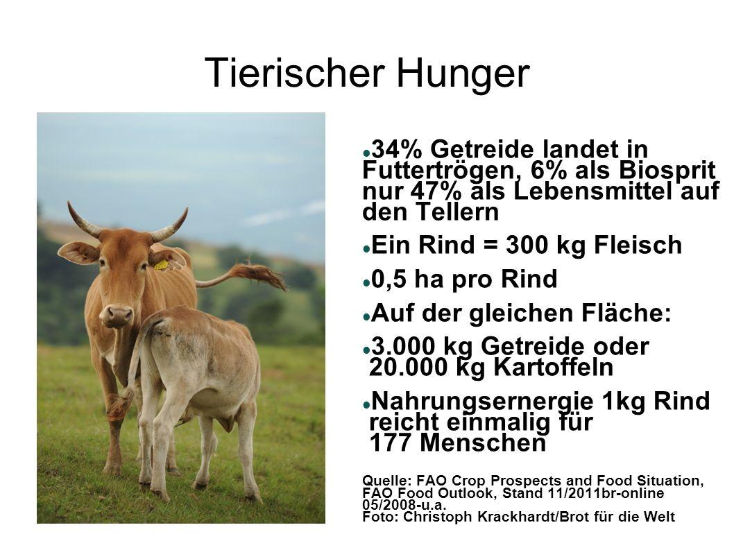 Tierischer Hunger 34% Getreide landet in Futtertrögen, 6% als Biosprit nur 47% als Lebensmittel auf den Tellern.