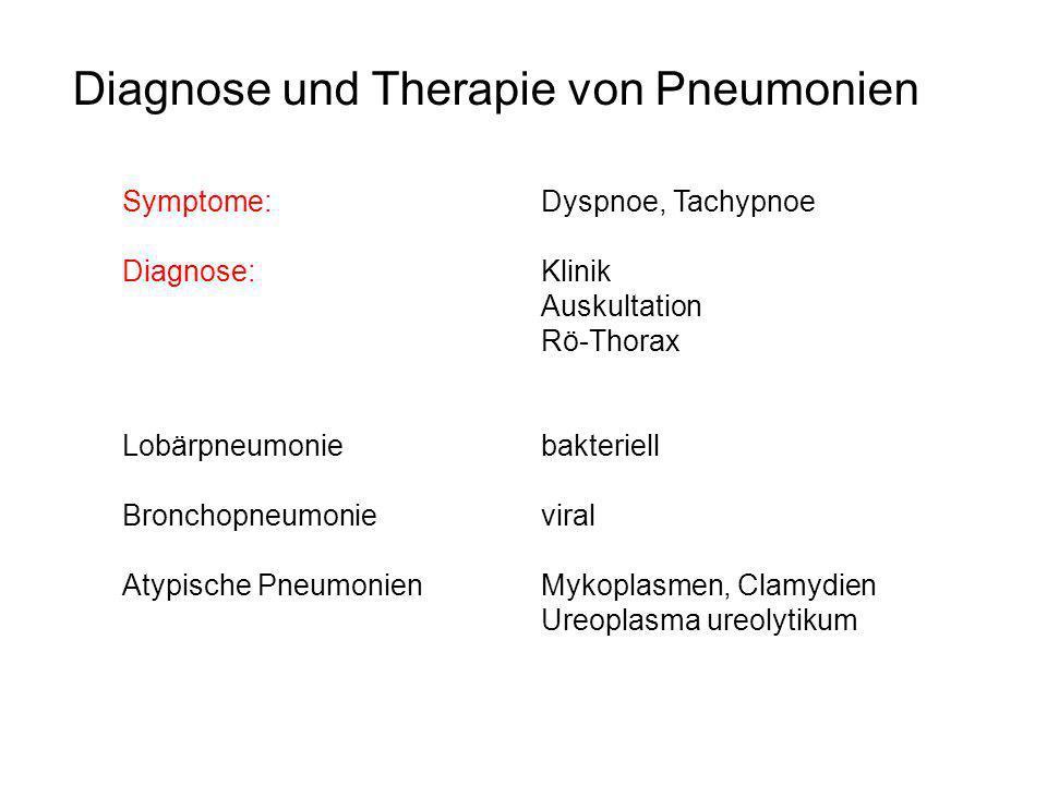 Diagnose und Therapie von Pneumonien