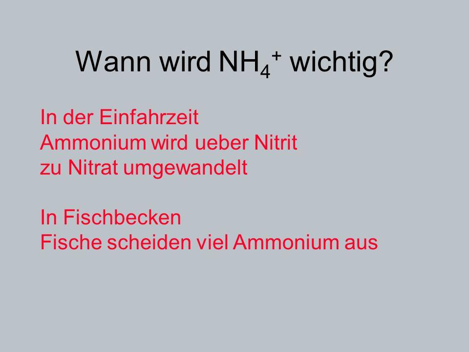 Wann wird NH4+ wichtig In der Einfahrzeit
