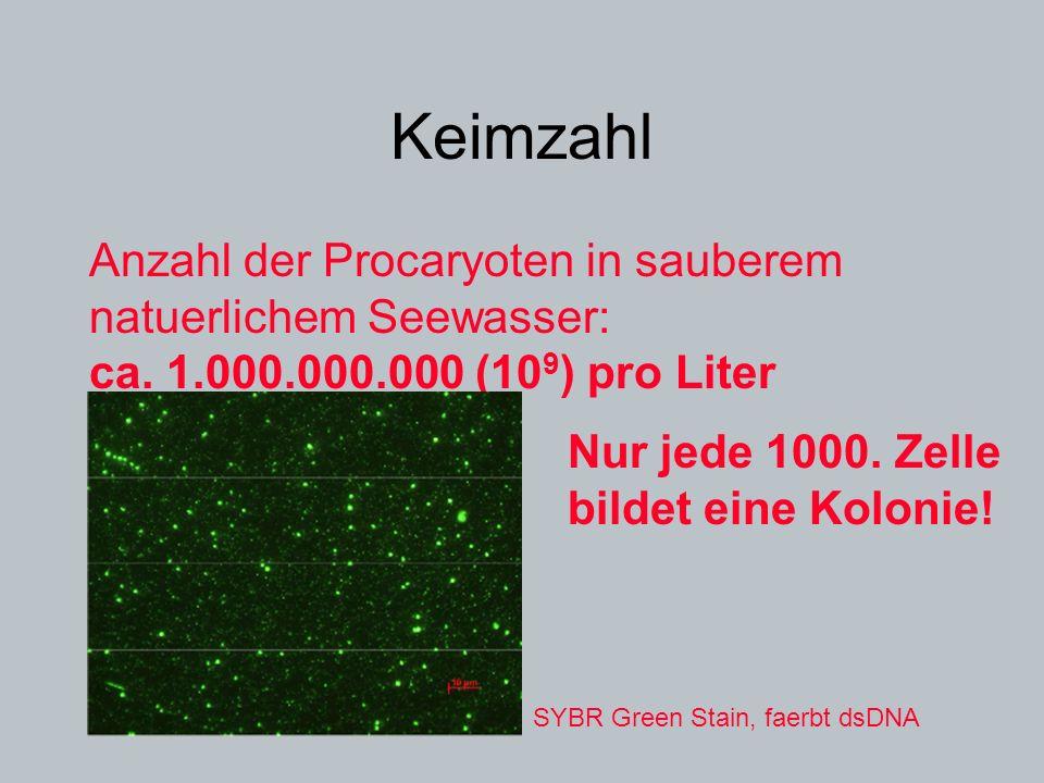 Keimzahl Anzahl der Procaryoten in sauberem natuerlichem Seewasser: ca. 1.000.000.000 (109) pro Liter.