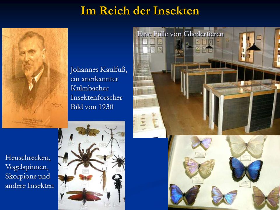 Im Reich der Insekten Eine Fülle von Gliedertieren Johannes Kaulfuß,