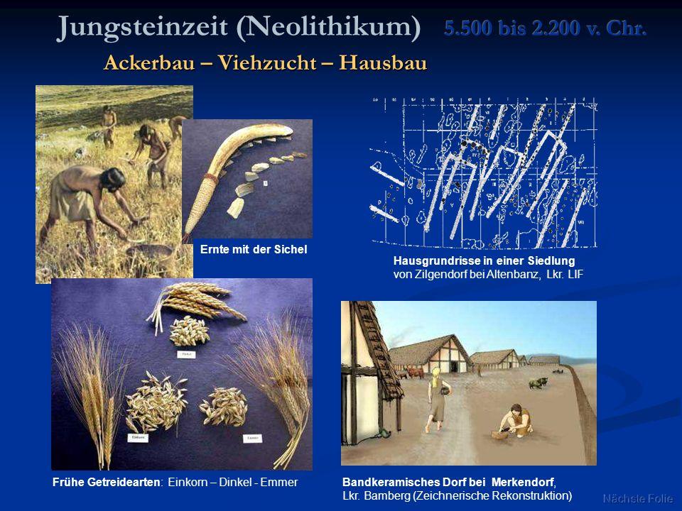 Jungsteinzeit (Neolithikum)