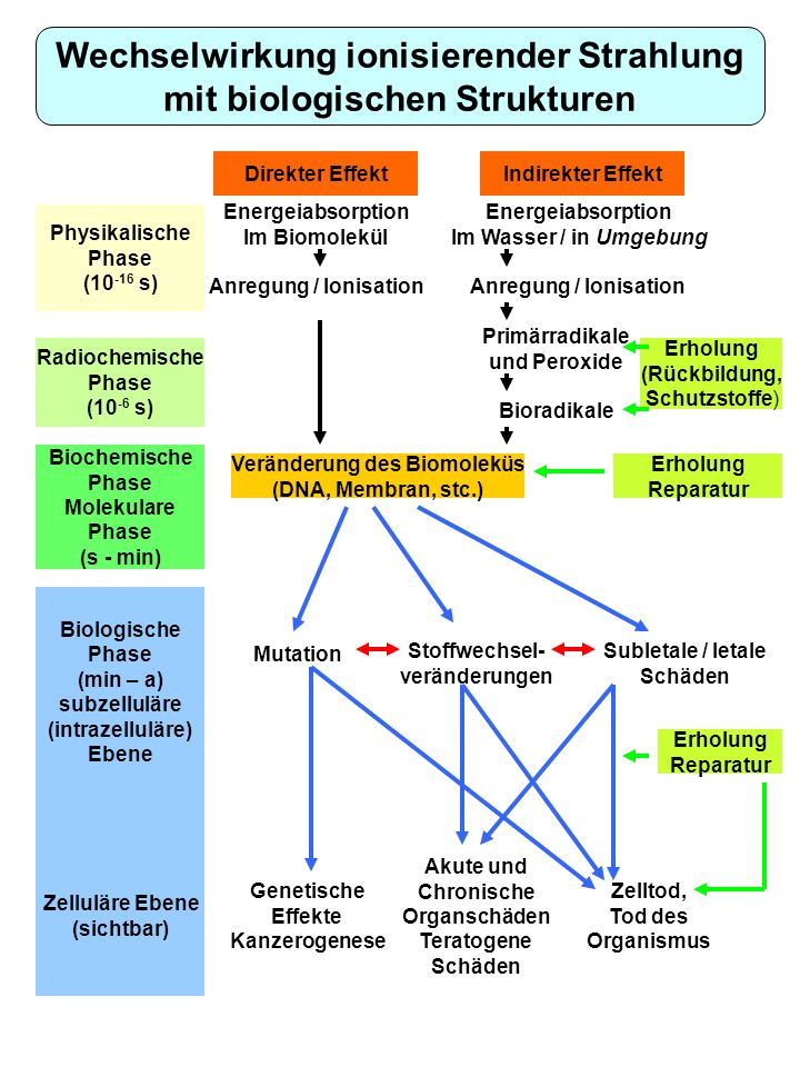 Wechselwirkung ionisierender Strahlung mit biologischen Strukturen