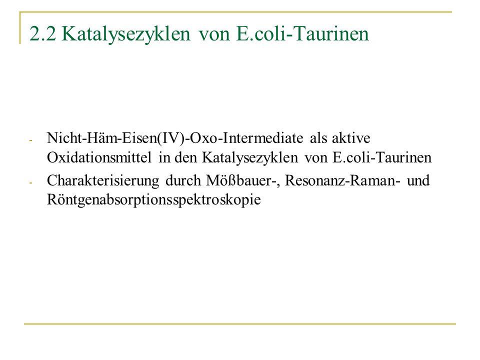 2.2 Katalysezyklen von E.coli-Taurinen