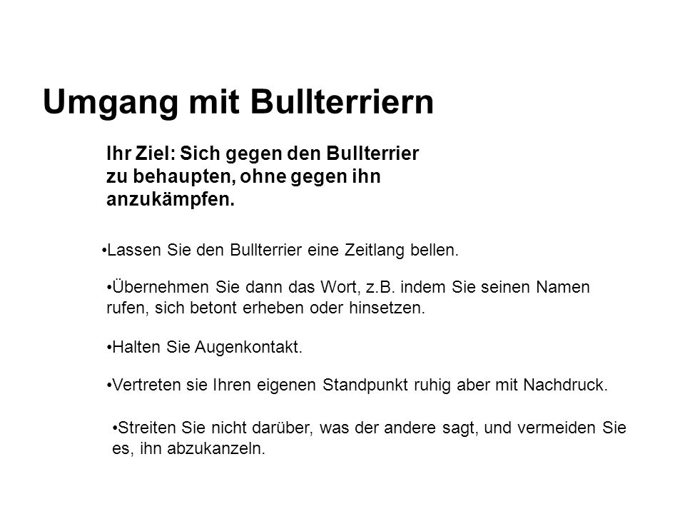Umgang mit Bullterriern