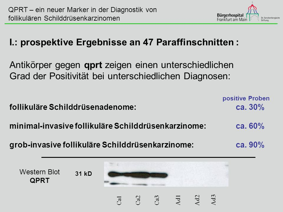 I.: prospektive Ergebnisse an 47 Paraffinschnitten :