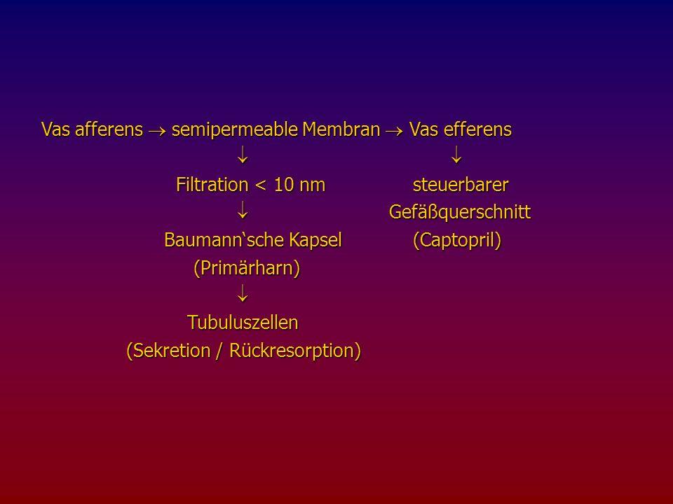 Vas afferens  semipermeable Membran  Vas efferens
