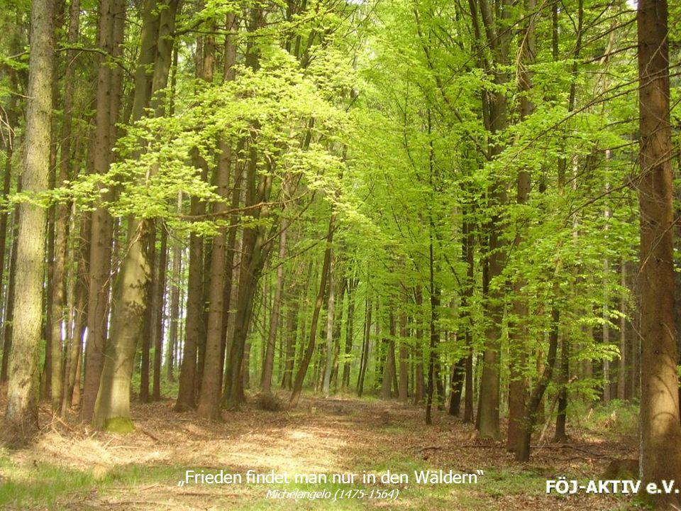 """""""Frieden findet man nur in den Wäldern Michelangelo (1475-1564)"""