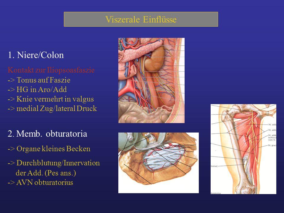 Viszerale Einflüsse 1. Niere/Colon 2. Memb. obturatoria