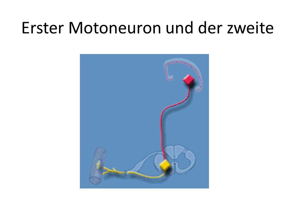 Erster Motoneuron und der zweite