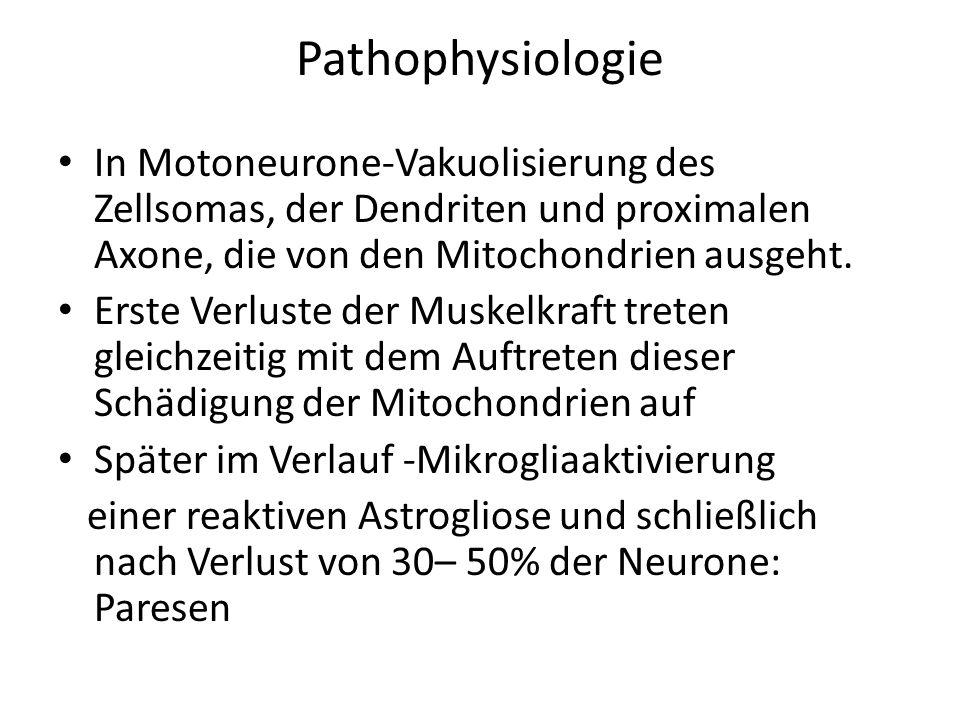 Pathophysiologie In Motoneurone-Vakuolisierung des Zellsomas, der Dendriten und proximalen Axone, die von den Mitochondrien ausgeht.