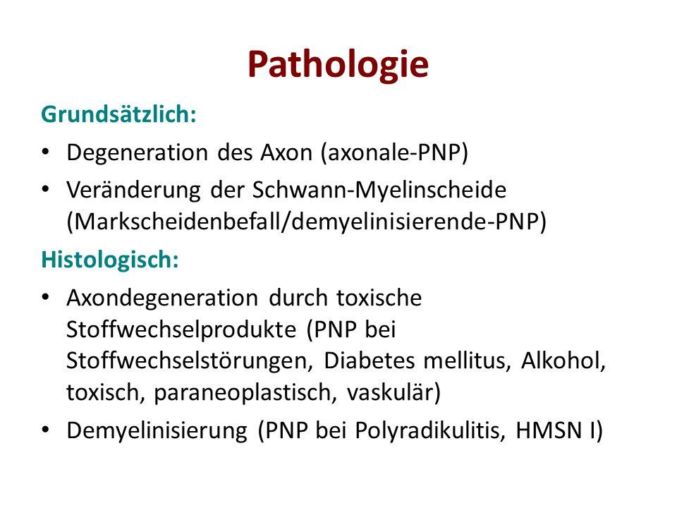 Pathologie Grundsätzlich: Degeneration des Axon (axonale-PNP)