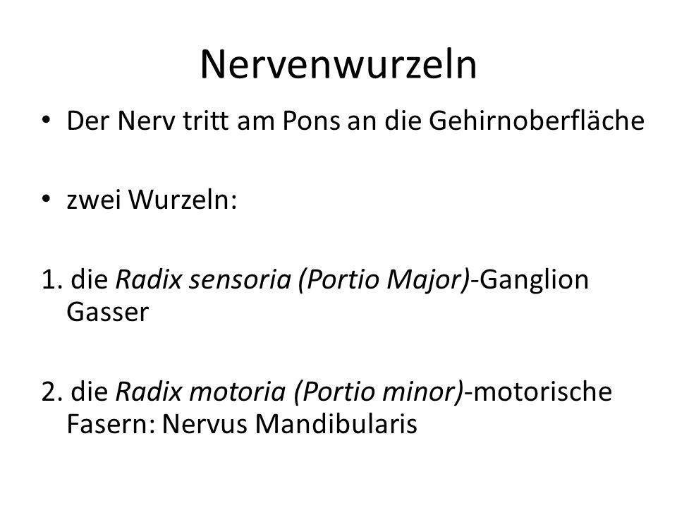 Nervenwurzeln Der Nerv tritt am Pons an die Gehirnoberfläche