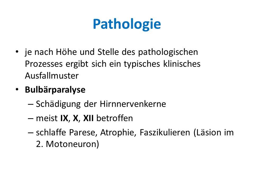 Pathologie je nach Höhe und Stelle des pathologischen Prozesses ergibt sich ein typisches klinisches Ausfallmuster.
