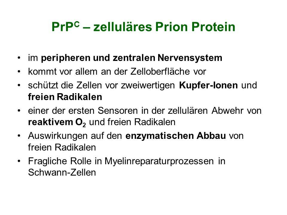 PrPC – zelluläres Prion Protein