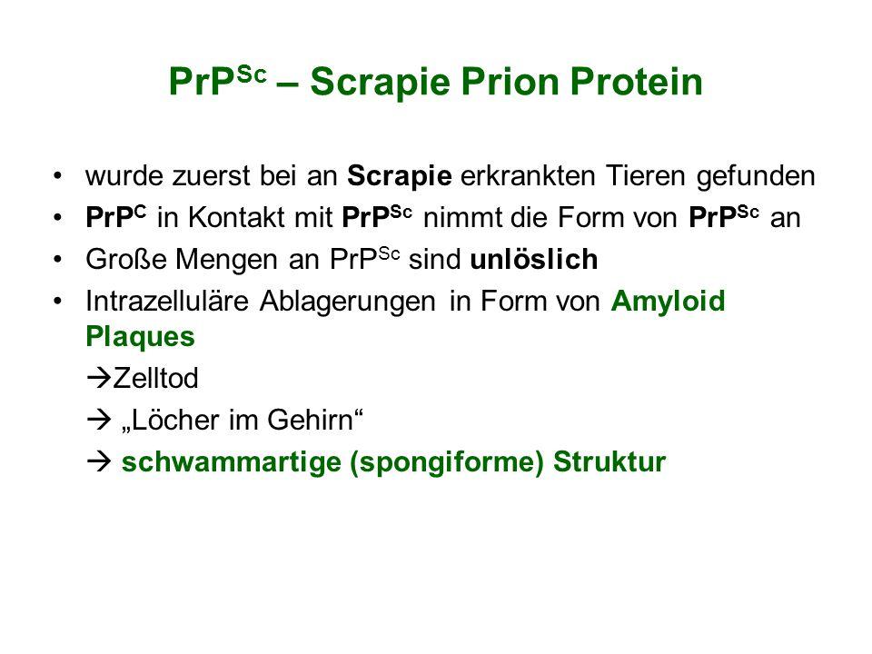PrPSc – Scrapie Prion Protein