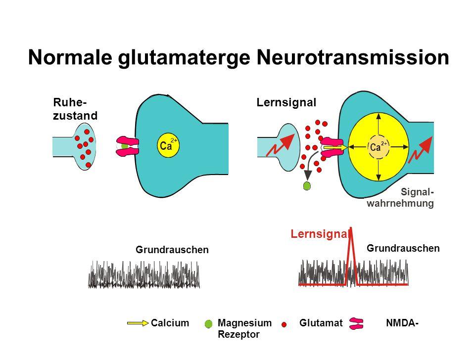 Normale glutamaterge Neurotransmission