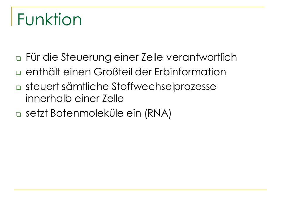 Schön Ventrikelseptums Funktion Zeitgenössisch - Anatomie Ideen ...