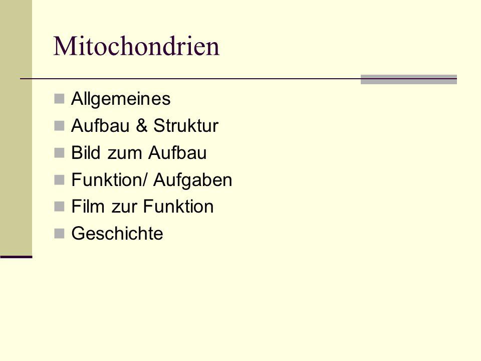 Mitochondrien Allgemeines Aufbau & Struktur Bild zum Aufbau