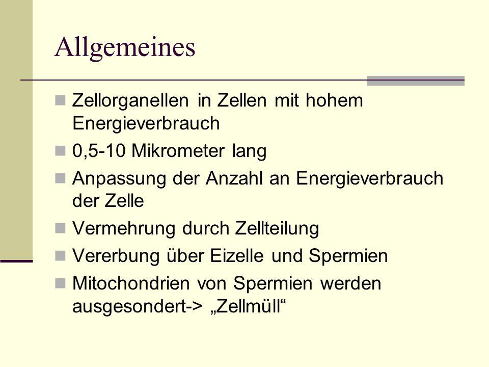 Allgemeines Zellorganellen in Zellen mit hohem Energieverbrauch